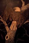 Desecration: The Empress' Plumage Loses Its Splendor by Stuart Holland