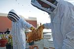 Rooftop Garden, Bees, Environmental Studies